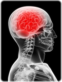 meningite-cerveau-meninges-soft.jpg